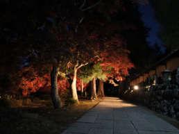 紅葉 諏訪 長円寺